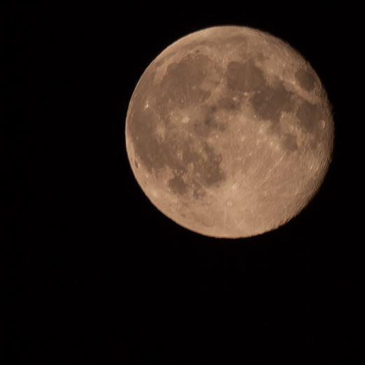 Moon festival (中秋節)