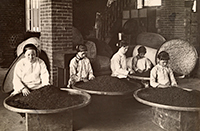 Women pick through tea on low stools in a Dadaocheng warehouse